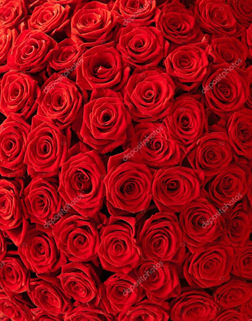 Plenty red natural roses background  — Stock Photo #12466832