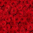 Roses background. — Stock Photo #13124937