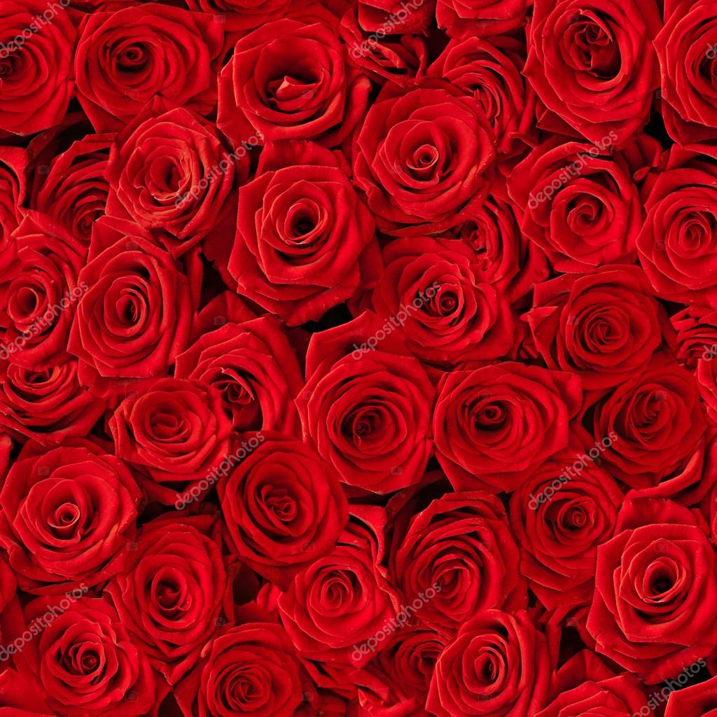 Plenty red natural roses seamless background — Stock Photo #13124937
