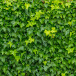 Green leaves background — Photo