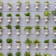 A small plants on wall — Stock Photo