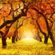 Autumn. Fall. Autumnal Park — Stock Photo