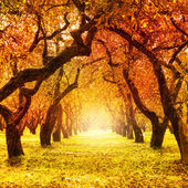 Autumn. Fall. Autumnal Park — Foto de Stock
