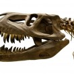 Dinosaur skeleton — Stock Photo #38546753