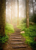Stairs going up hillside in forest toward sunset — Stock Photo