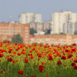 Royalty-Free Stock Photo: View of the city from a poppy field