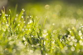 Close up of grass — Stock Photo