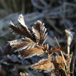 Frost on a herbs — Stock Photo
