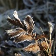 Frost on a herbs — Stockfoto