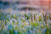 Dewdrops on the grass — Stock Photo