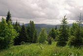 Ukrainian Carpathian Mountains — Stock Photo