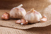 Garlic close up — Stock Photo