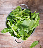 Fresh spinach and sorrel — Stock Photo