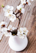 Apricot blooming brunches in the vase — Stockfoto