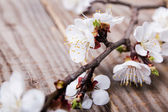 Apricot blooming bruncheson the table — Stockfoto