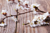 Apricot blooming bruncheson the table — Stock Photo