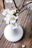 Apricot blooming brunches in the vase — Stock Photo