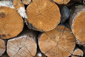 Pile of chopped fire wood — Stock Photo