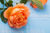 Peach colored rose on the table — Stock Photo