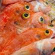Fish yellow eye — Stock Photo #16617667