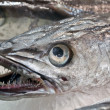 Stock Photo: Hake fish