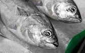Tunny & tuna — Stock Photo