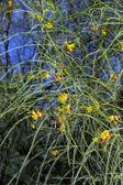 Albero in fiore — Foto Stock