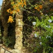 Stock Photo: Flowerses in the park Guell