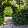 Stock Photo: Arched shrubs gardens