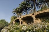 Palm in the park Guell — Stock Photo