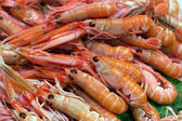 Red shrimp — Stock Photo
