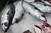 Fish in ice — Stock Photo