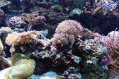 海の魚熱帯 — ストック写真