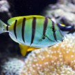 Fish on a reef — Stock Photo #19813765