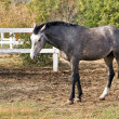 Pastures of horse farms — Stockfoto #21723915