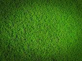 草の性質 — ストック写真