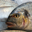 Stock Photo: Fresh dorado fish on ice