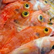 Fish yellow eye — Stock Photo #25759461