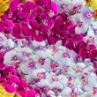 Orchid decoration background — Stock Photo