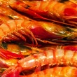 Prawn background — Stock Photo