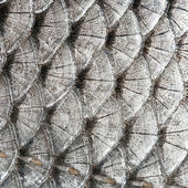 Texture scales fish — Stock Photo