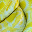 Snake yellow skin — Stock Photo