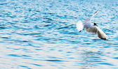 Sea gull on by sea — Stock Photo
