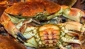 Crabs on ice — Stock Photo