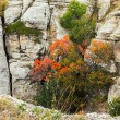 Autumn flora in mountains — Stock Photo
