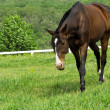Horse on meadow background nature  — Photo