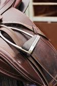 Saddle horse — Stock Photo
