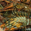 Crayfish background food sea — Stock Photo