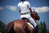 乗馬馬術 — ストック写真