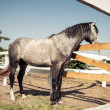 Portrait of a horse, Vintage retro style. — ストック写真 #35692755